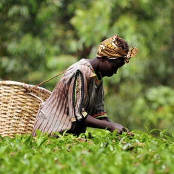 Optimizing African Food Systems