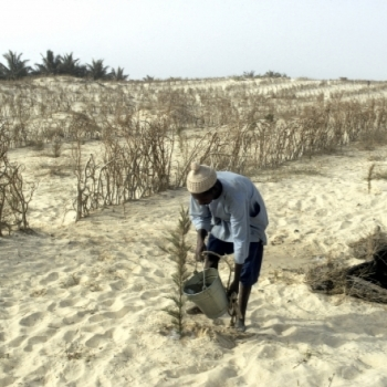 Paris Agreement on climate change: One year later, how is Africa faring?
