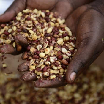 Unsafe Food: Africa's Silent Killer